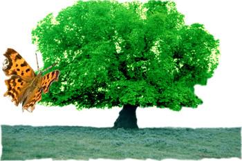 Papillon_arbre